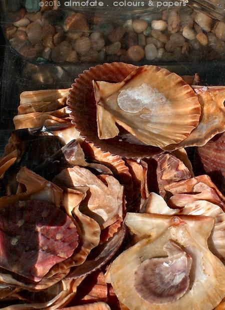 @ Almofate - Seashells Collection _ Colecção de Conchas