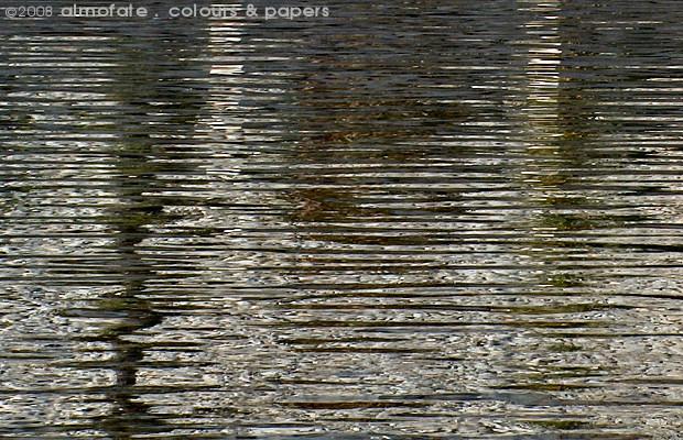@ Almofate - Pond Reflections _ Cascais _ Reflexos num Tanque