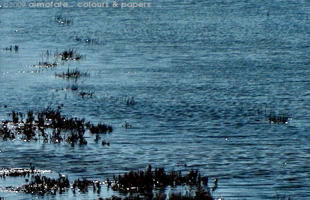 @ Almofate - Salt marshes at high tide _ Tavira _ Sapal na maré alta