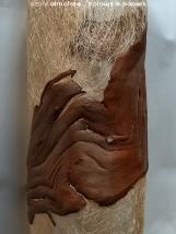 @ Almofate - Tree bark piece on canvas _ Peça de casca de árvore sobre tela