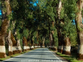 @ Almofate - Countryside road _ Portugal _ Estrada nacional